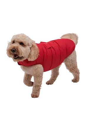 Padded Water-Resistant Dog Jacket - Large